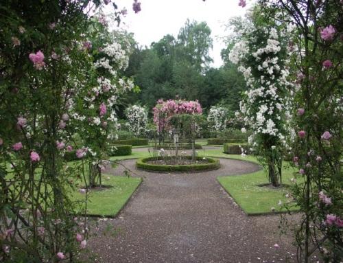 Warwick Castle – Rose Garden