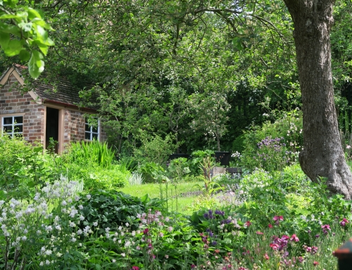 """Photography Competition 2021 """"In a Warwickshire Garden""""."""